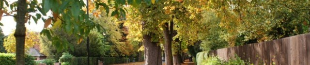 cropped-autumn-in-the-park-02.jpg