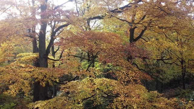 Dingle Trees