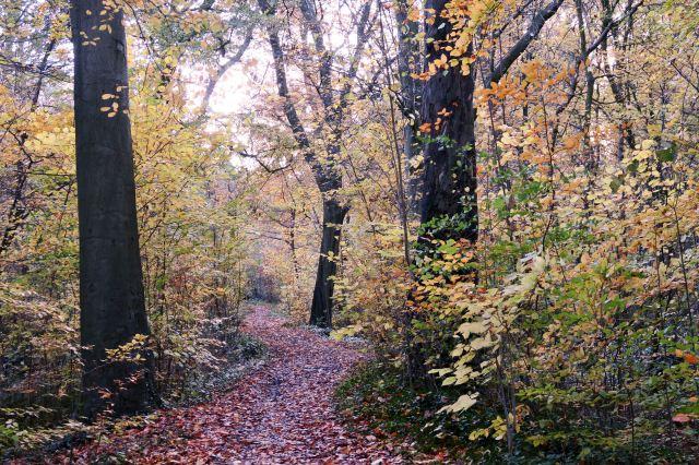 Dingle Walk